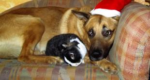 """George und """"sein"""" Kaninchen"""