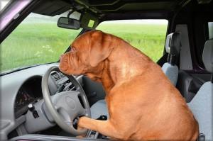 Mitfahrer gesucht!