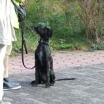Hundeerziehung mit dem Hundecoach