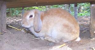 Kaninchen trauern wie Menschen