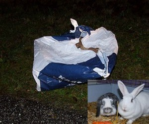 Ausgesetzte Kaninchen in Tüte ...