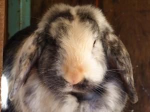 Gehege 10: Kaninchen 1