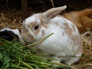 Gehege 10: Kaninchen 3