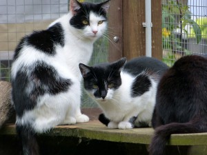 Sammy (links) und Lina