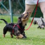 Gruppenlogo von Hundeschule